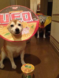 UFOさん。oO(同じメーカーだけど、見かけたら征伐しちゃろ! …ボンゴレさん、逃げて〜((((;゚Д゚)))))))