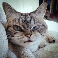 Every morning  #goodmorning #catstagram #catsagram #cat #cats #kitten #instacat  #catsofinstagram #catsoninstagram #pet #pets  #cute #cutecat  #instacat_meows #catoftheday #gato #cats_of_instagram  #kittycat #catlover #ilovecats #animals #meow #instacute #photooftheday #animaladdicts #nature_cuties #igcutest_animals by loki_kitteh