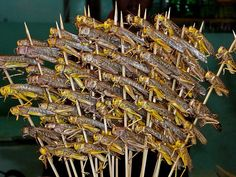 Grasshoppers on skewers, China