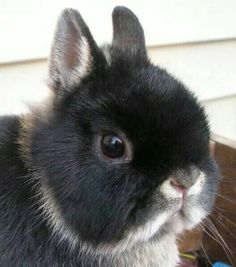 Adorable....Little Bunny.....Little Ears