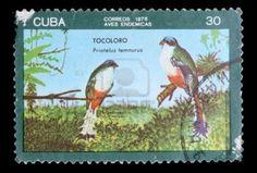 "CUBA - CIRCA 1976: A postage stamp printed in the Cuba shows image the life of birds, the bird ""TOCOLORO Priatelus temnurus"", circa 1976"
