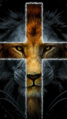 lion of the tribe of Judah Jesus Wallpaper, Lion Live Wallpaper, Cross Wallpaper, Animal Wallpaper, Tumblr Wallpaper, Lion Wallpaper Iphone, Lion Images, Lion Pictures, Jesus Pictures