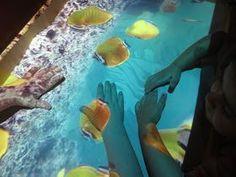 Sealife video through overhead projector on sand table Overhead Projector, Sand Table, Reggio Emilia, Sensory Toys, Infant Activities, Diy Table, My Children, Easy Diy, Kindergarten