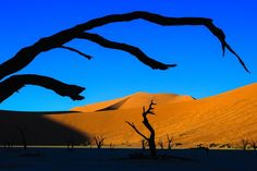 The arid desert landscape of Namibia has a captivating beauty. Even in Sossusvlei, among the dead outcroppings of trees, the color of the dunes and the leafless branches create their own abstract art.