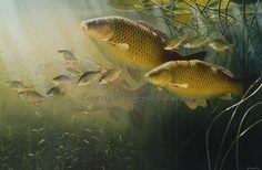 15 Awesome david miller artist fish