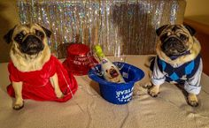 Happy New Year❗ An Nou Fericit ❗ #mauricethepug #bubble #queenb #2018 #happynewyear #lamultiani #annoufericit #revelion #newyearseve #party #partyanimals #littlereddress #pugstory #pugchat #pets #puglife #champagne #pug #mops #dog #puppy #tirgumures #romania