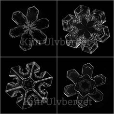 Winter Picture, Plant Cell, Things Under A Microscope, Green Life, Oslo, Prints For Sale, Norway, Geometry, Snowflakes