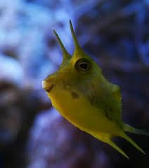 Image result for coolest fish