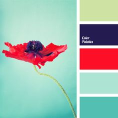Bright blue blends perfectly with scarlet red. This combination will be appropriate in any room, whether it is a bathroom or a bedroom..