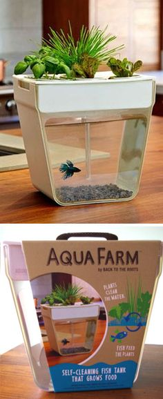 Aqua Farm Self Cleaning Fish Tank I WANNNT