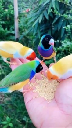 Beautiful Good Night Images, Beautiful Birds, Animals Beautiful, Funny Birds, Cute Birds, Exotic Birds, Colorful Birds, New Nature Wallpaper, Cool Pictures Of Nature