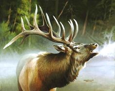 Great Art Now - Elk In Mist by Spencer Williams Canvas Wall Art Wildlife Paintings, Nature Paintings, Wildlife Art, Animal Paintings, Animal Drawings, Oil Paintings, Painting Portraits, Elk Pictures, Animal Pictures