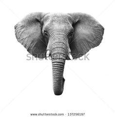 elephant - Szukaj w Google