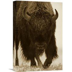 Global Gallery American Bison Portrait in Snow North America Wall Art - GCS-395919-1218-142