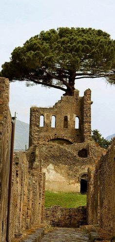Pompeii, Italy...I definitely want to go back one day!