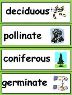 Science Word Wall Cards- color coded by topic!! 25 pages to include lots of important science vocabulary for 3rd grade :) $