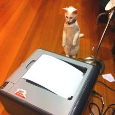 My cat Minka was so amazed with the printer that she stood on her two legs for a good 15-20 seconds!