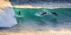 Surfing with Dolphins.