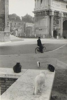 Henri Cartier-Bresson (1908-2004, French) | THE GREAT CAT
