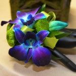 Blue Dendrobium Wrist #Corsage Price:  $22.98 Blue Dendrobium orchids with kermit poms and a green ribbon.