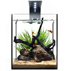 Introducing the EcoPico nano aquarium. 5.1 gallons and elegantly designed with LED lights