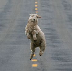 30 Happiest Animals In The World