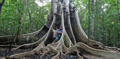 Tree Roots, Park, Nature, Parks, The Great Outdoors, Mother Nature, Scenery, Natural