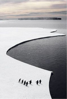 yatzer: penguins ice cropped by ASOC Pictures. (via Bloglovin.com )