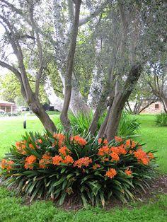 Shade Garden Plants (fire lily) for the left side of backyard Garden Yard Ideas, Lawn And Garden, Garden Projects, Mailbox Garden, Outdoor Plants, Outdoor Gardens, Backyard Plants, Backyard Shade, Garden Shrubs