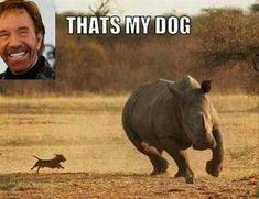 Chuck-Norris-Thats-his-dog-chuck-norris-meme-funny-331