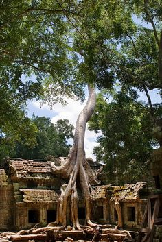 Ta Prohm, Angkor Wat. Was here in 2008. Trees and old architecture became my obsession.