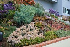 Hillside Garden, Dry Garden, Sloped Garden, Green Garden, Landscaping A Slope, Succulent Landscaping, Planting Succulents, Landscaping Ideas, Farm Gardens