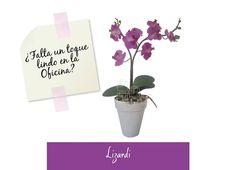 Arreglos florales: ¿Falta un toque lindo en la Oficina? Un detalle que te encantara en el lugar donde pasas gran parte de tu tiempo.  #LunesAnimo #Lizardi
