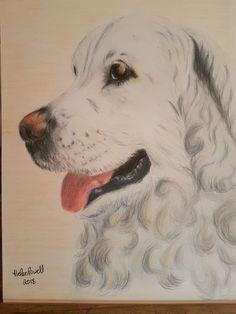 Coloured Pencils, Portrait, Artwork, Dogs, Animals, Color, Art Work, Animales, Colour