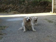 Nana y Otto