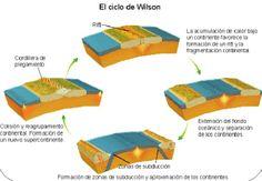 El Ciclo de Wilson postula que cada 400-500 millones de años todas las masas de la tierra emergidas se unen para formar un supercontinente. Las placas tectónicas se desplazan por la superficie terrestre, terminan por chocar y soldarse. Como el supercontinente impide la liberación del calor interno, se fractura y el proceso comienza de nuevo. #tectonicaplacas #ciclowilson