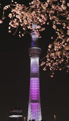 開花宣言の夜、スカイツリーもほんのり桜色