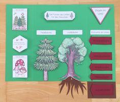 sofort einsetzbares Material für ein Lapbook zum Thema Wald im Sachunterricht der Grundschule
