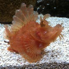 Ugly fish?