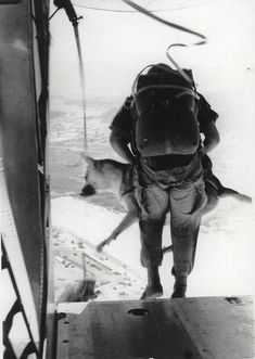 """Sgt. Spano and Lobo, Da Nang, Vietnam, August 1968 by Marine Corps Archives  Special Collections, via Flickr. One of a series of official Marine Corps photographs of Sgt. Spano and his War Dog Lobo completing a parachute jump in Da Nang, Vietnam, August 1968.    The caption reads """"Away they go—Spano and Lobo dive out of the plane for the long awaited jump.""""    From the Jonathan F. Abel Collection (COLL/3611), United States Marine Corps Archives  Special Collections    OFFICIAL USMC PHOTOGRAPH"""