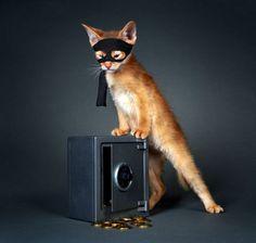 Картинки по запросу абиссинская кошка