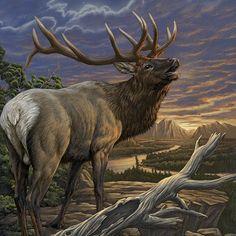 Elk by Dimitar Neshev Elk Images, Elk Pictures, Animal Pictures, Wildlife Paintings, Wildlife Art, Animal Paintings, Easy Paintings, Wild Life, Elk Drawing