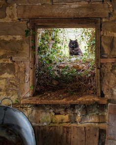The Barn Cat Photograph  - The Barn Cat Fine Art Print