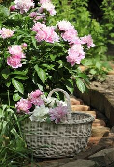 A basket waiting for peonies.