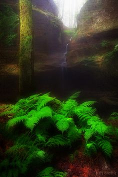 If this isn't a faerie grotto, I don't know what is.  (In+Deep+Places)
