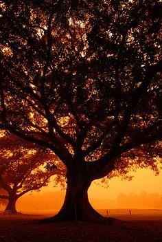 Sydney Dust Storm 2009 - Burning tree | Flickr - Photo Sharing❤️