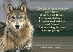 Truth of life. Wolf Pack Quotes, Lone Wolf Quotes, Wolf Spirit Animal, Fabulous Quotes, Wolf Pictures, Beautiful Wolves, Truth Of Life, Wild Dogs, Animal Totems