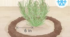 How to Plant Lavender in Pots: 13 Steps (with Pictures) - wikiHow Growing Lavender From Seed, Lavender Bush, Cactus Plants, Garden Plants, House Plants, Potted Plants, Vegetable Garden, Lavender Potted Plant, How To Propagate Lavender