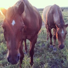 """I WAS TAKING TO MY GMA LAST NIGHT ABOUT LIBERTY HORSEMANSHIP THE OTHER NIGHT. BEING RAISED AROUND HORSES THE OLD SCHOOL WAY, SHE DIDN'T REALLY GET IT.SHE REPEATEDLY TOLD ME THAT """" HORSES HAVE BEEN BRED TO BE RIDDEN FOR THOUSANDS OF YEARS,THEIR SUPOSED TO WORK FOR US."""" OF COURSE AT THIS POINT I WAS DISTRAUGHT, I DIDN'T KNOW HOW I WAS GOING TO GET MY POINT ACROSS.UNTILL I PROMPTLY IMPLIED THIS..... """" WHY DO WE HAVE DOGS? WE DON'T HAVE THEM TO TAKE WALKS.WE SEEK THEM OUT FOR COMPANIONSHIP, LOVE…"""