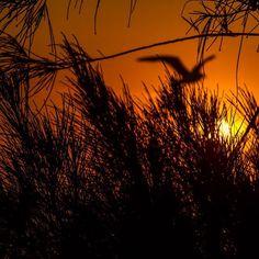 Sunrise Shots    /    #riodejaneiro #rioeuamoeucuido #rioeuteamo #errejota #destinoerrejota #vejario #jornaloglobo #rj #rio #riomais #landscape #cidademaravilhosa #clarklittle #canon_official #recreiodosbandeirantes  #shootforaloha #surfersparadiseaus #canon7d #landscape #cidademaravilhosa #sunrise #021rio #lands #landscape_lovers #capture #nature #natureza #nature_shooters #amanhecer #riodejaneiroinstagram #vsco #vscocam by _fernandoandrade http://ift.tt/1PI0tin